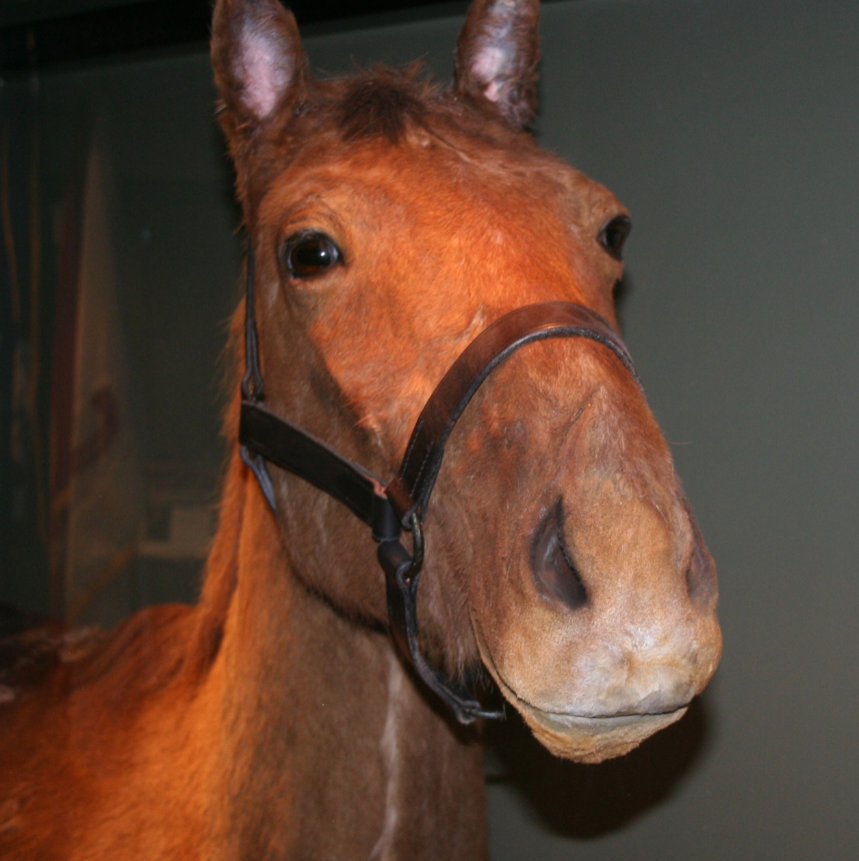"Thomas Jonathan ""Stonewall"" Jackson's Horse, Little Sorrel"